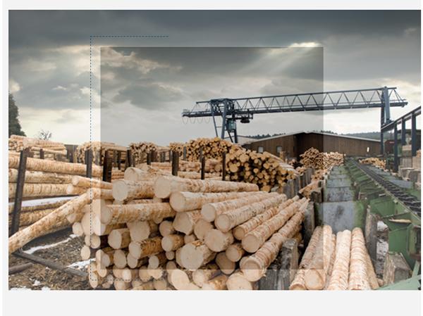Service-für-die-Holzindustrie